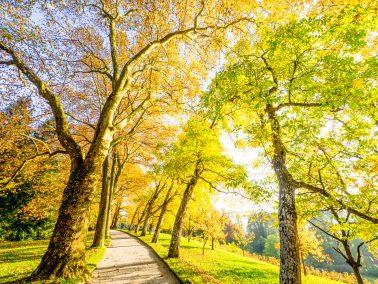 Fotograf Mainau, Herbst