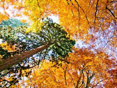 Landschaftsfotografie, Herbst